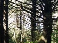 Branch geometry