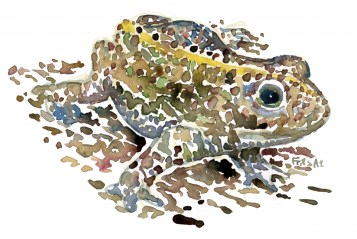 Natterjack watercolor