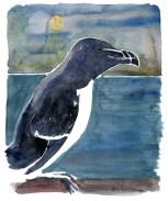 Razorbill coastal bird
