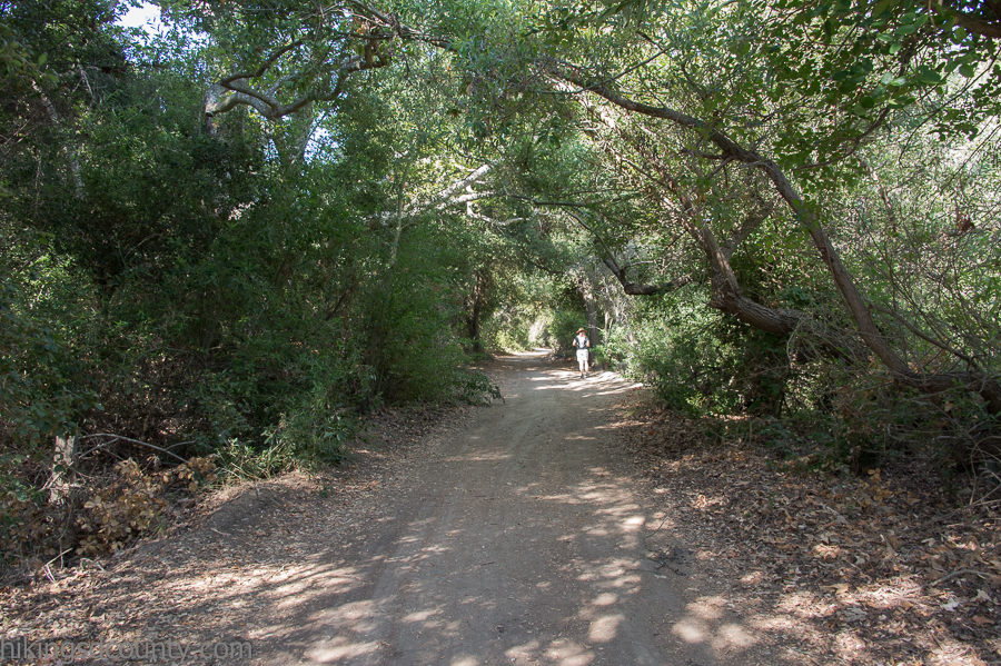 The Rose Canyon trail has several well shaded sections