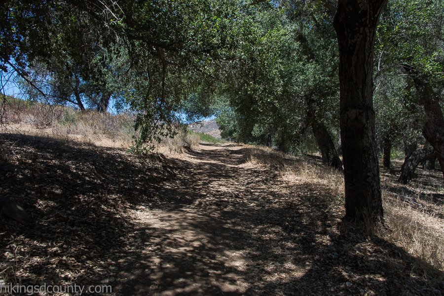 Tall oaks provide shade along the Hollenbeck Canyon trail