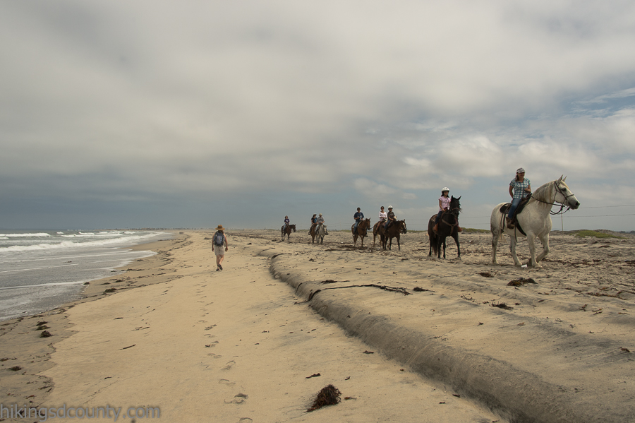 Horses are allowed on the beach at Border Field State Park