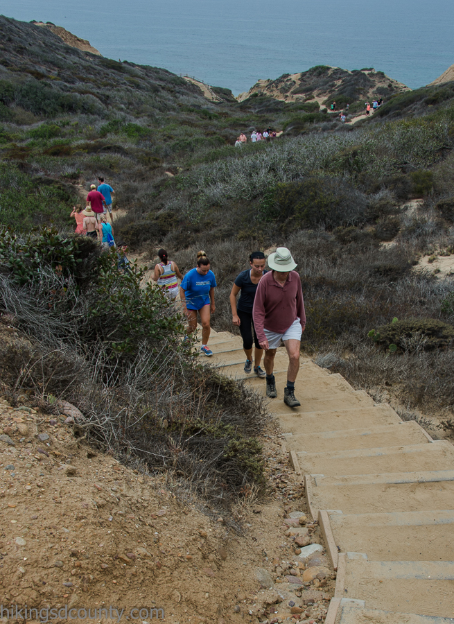 The busy Beach Trail at Torrey Pines