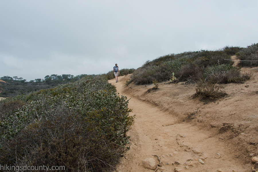 Climbing the Broken Hill Trail at Torrey Pines
