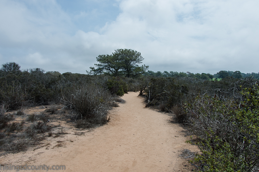 The South Fork trail at Torrey Pines