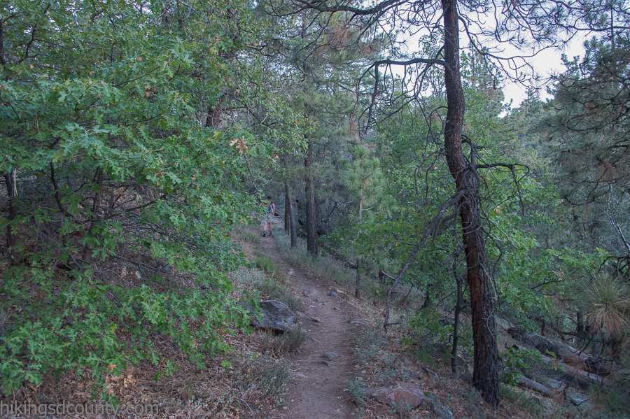 The Pacific Crest trail, just north of Desert View Picnic Area