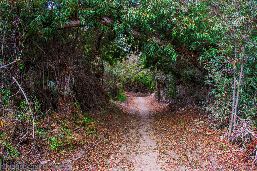 Dense trees form a tunnel along the Tijuana River Valley
