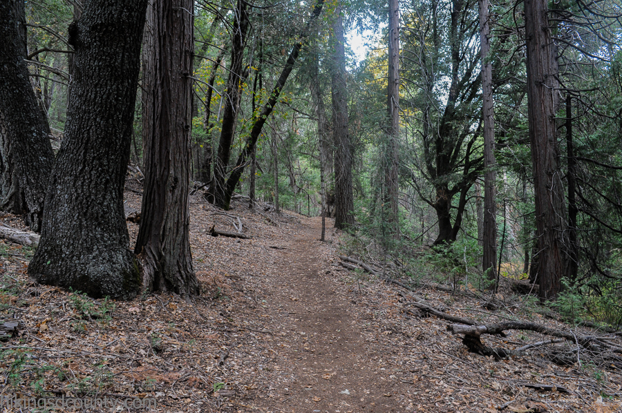 The lush woods of Palomar Mountain