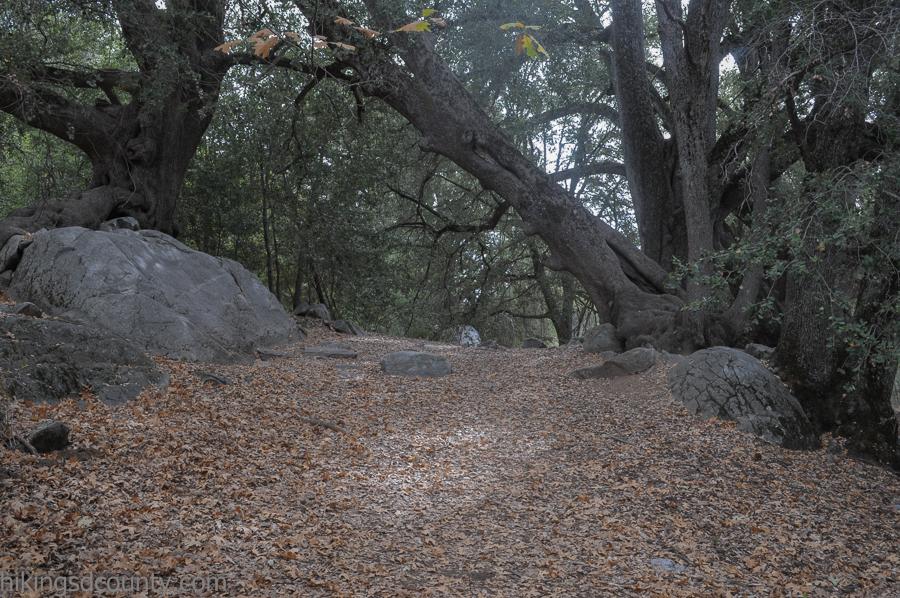 Entering the oaks