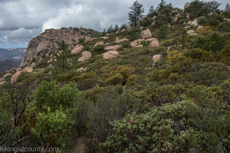 Ascending through more manzanita