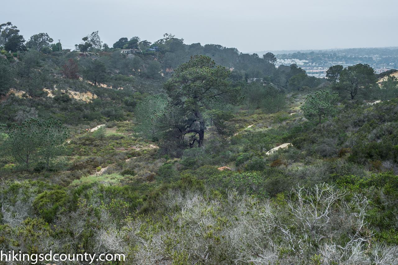Del Mar Dog Friendly Hikes