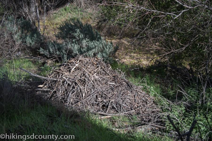 20160313_DSC0984Kitchen Creek Fall