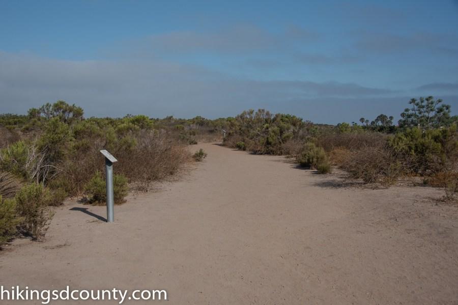 Scripps_Coastal_Reserve_DSC_8239
