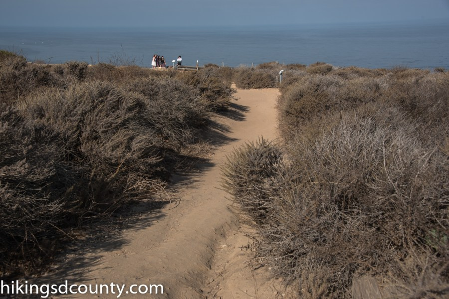 Scripps_Coastal_Reserve_DSC_8271