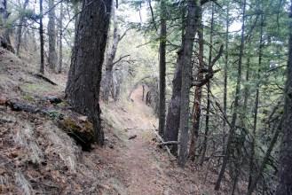 Cool, beautiful walk through the woods.