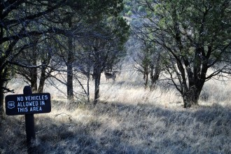 Local wildlife.