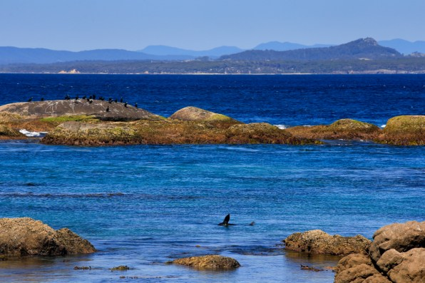 Little Dromedary seen from Montague Island, off the coast of Narooma