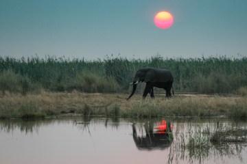 img 0607 lr On Safari in Botswana