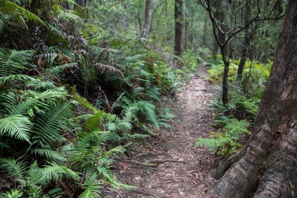 Janet Cosh Wildflower Walk