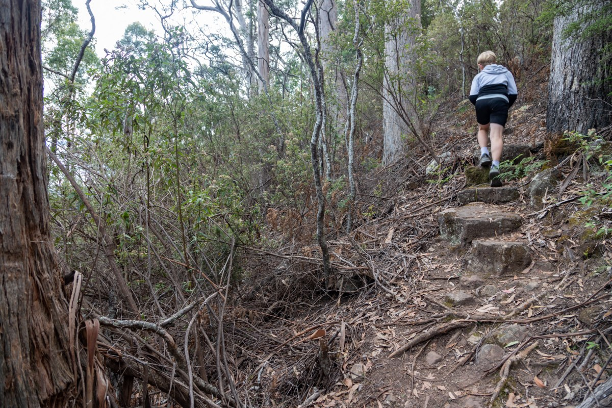 img 9766 lr Mount Maria hike (Maria Island)