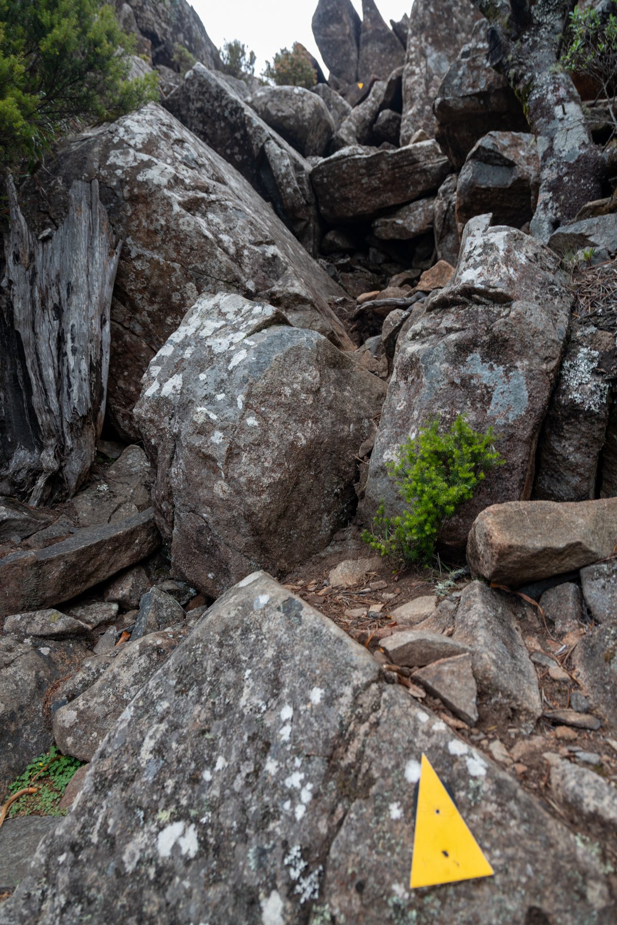 img 9789 lr Mount Maria hike (Maria Island)
