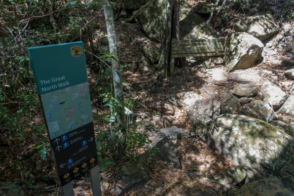 The GNW intersects the Piles Creek Loop Track