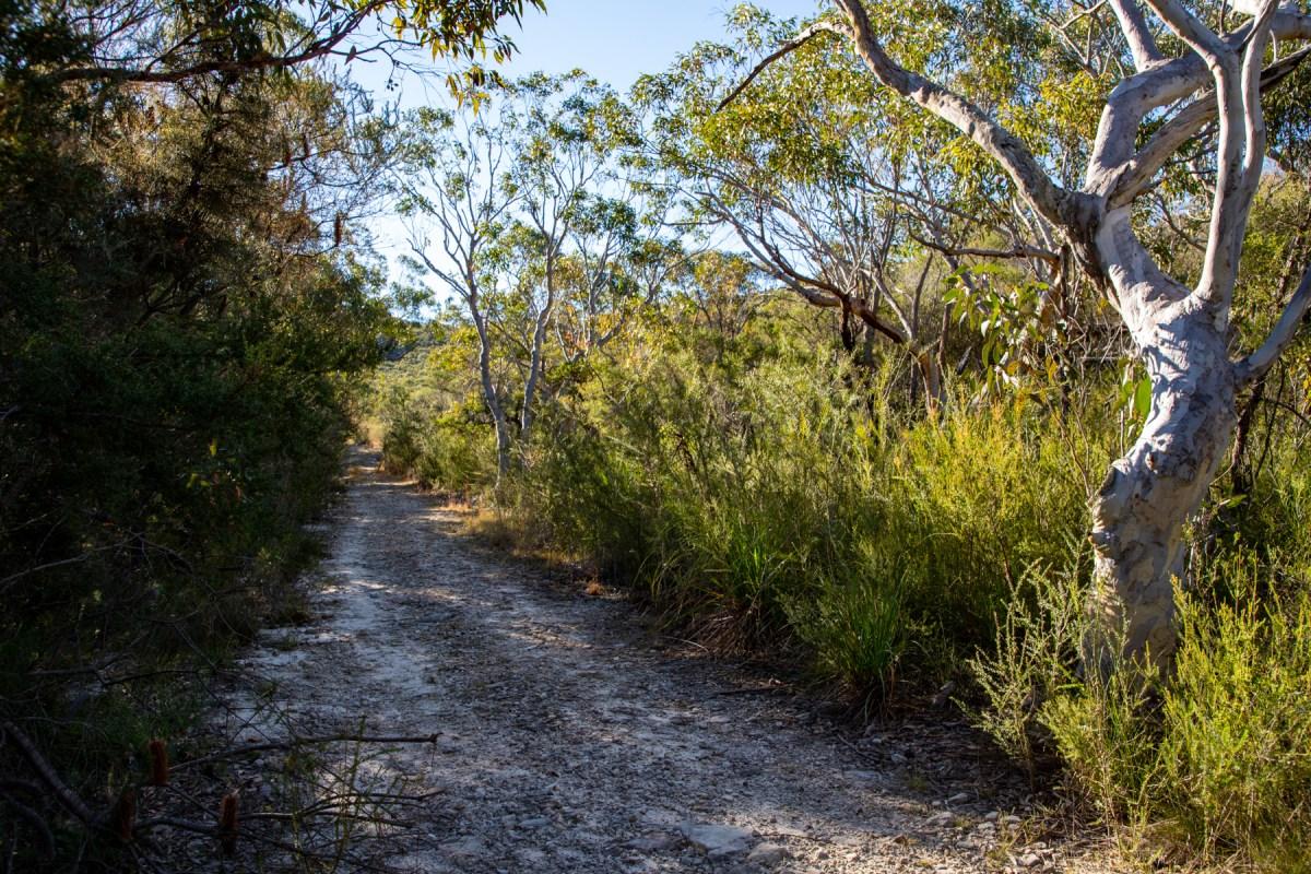 img 5816 lr Guide to West Head bushwalks