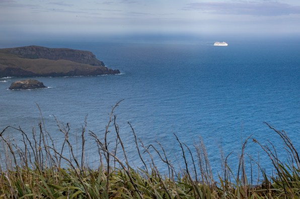 Cruise ship making its way past Cape Saunders