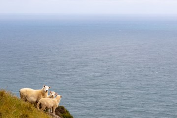 img 0265 lr Sandymount and Sandfly Bay (Otago)