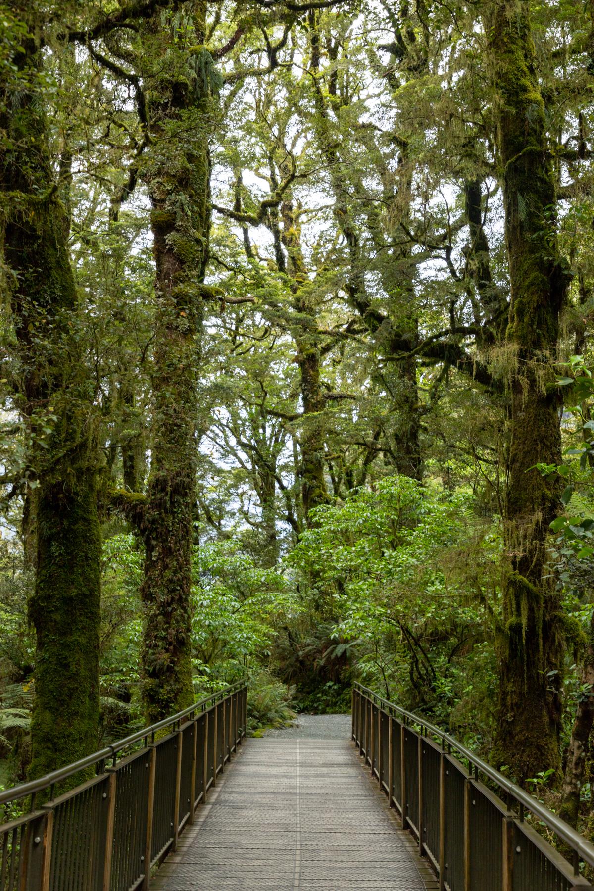img 9794 lr The Chasm (Milford Sound)