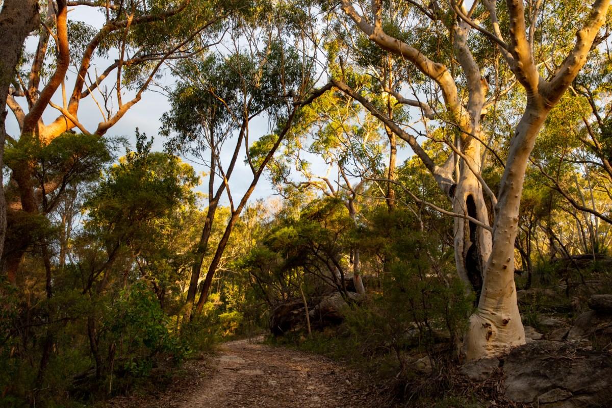 Smiths Creek Trail