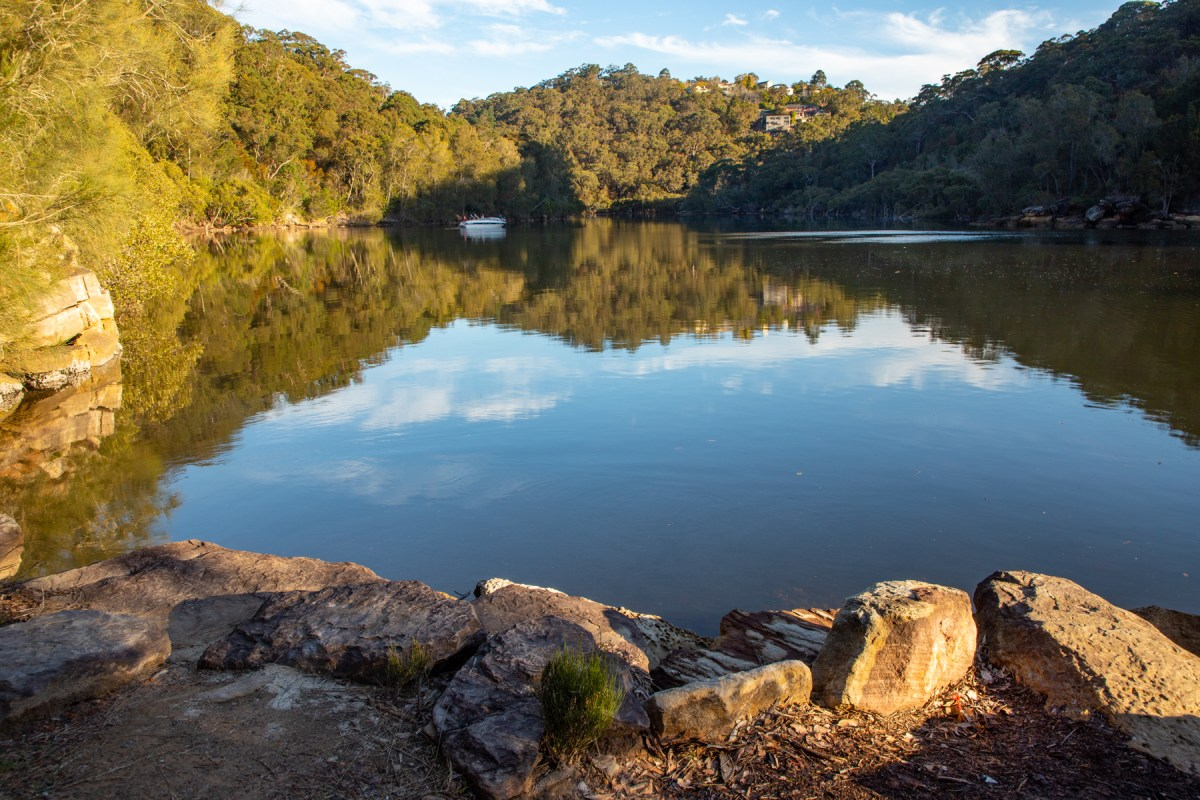 Middle Harbour Creek from Lyrebird Track