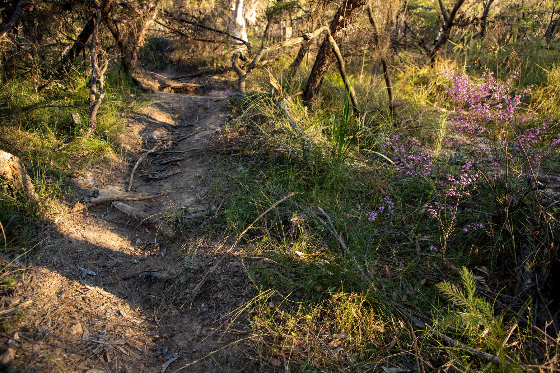 img 6692 lr Heath Trail and Bare Creek Loop (Garigal NP)