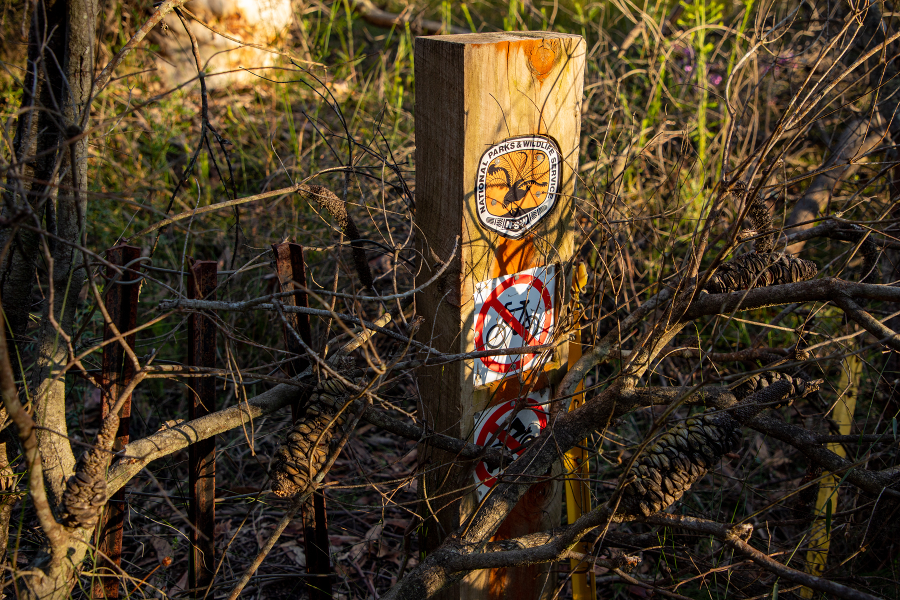 img 6693 lr Heath Trail and Bare Creek Loop (Garigal NP)