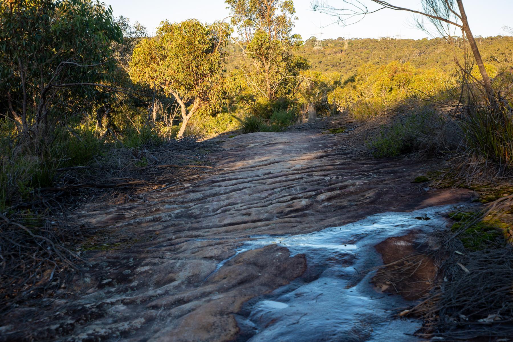 img 6704 lr Heath Trail and Bare Creek Loop (Garigal NP)