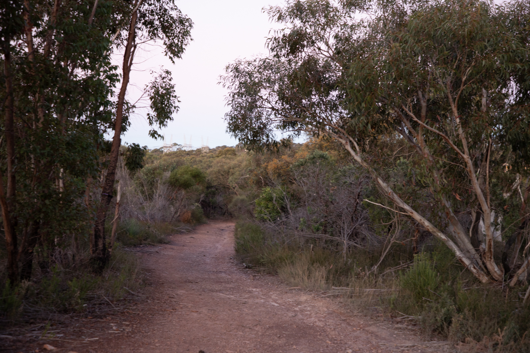 img 6765 lr Heath Trail and Bare Creek Loop (Garigal NP)
