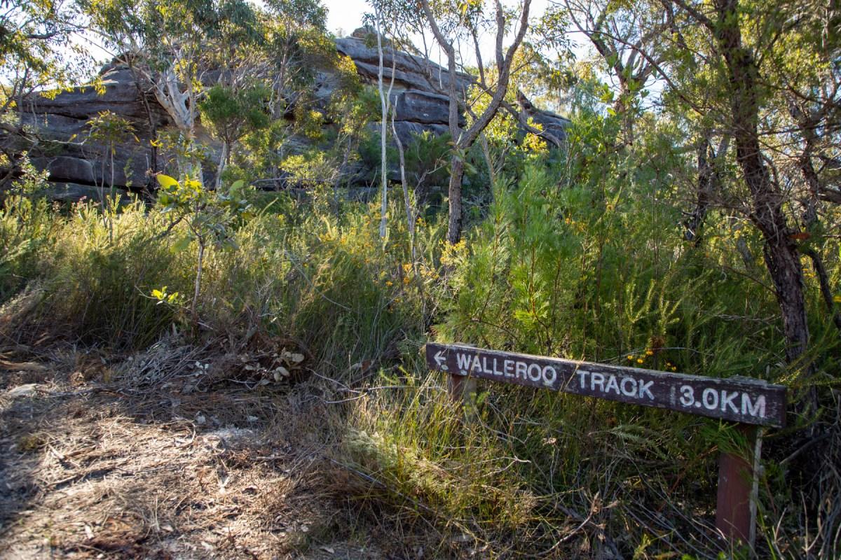 img 6919 lr A quick trip to Wallaroo Hill