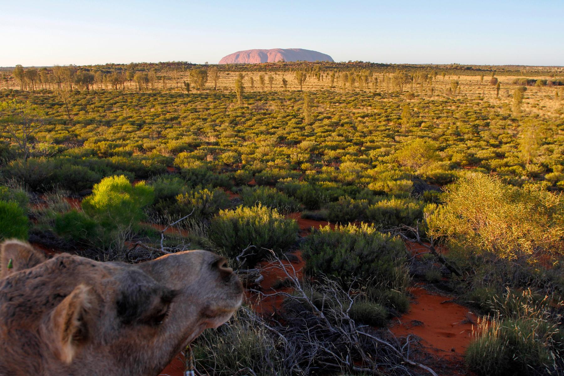 mg 2034 lr What to do in Uluru