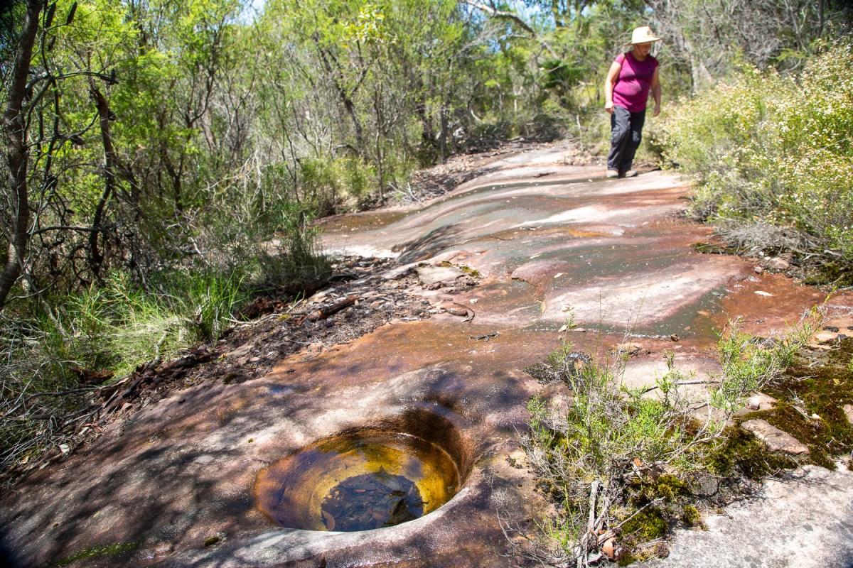 awat7893 lr Milyerra Trail - birds, fish and kangaroo