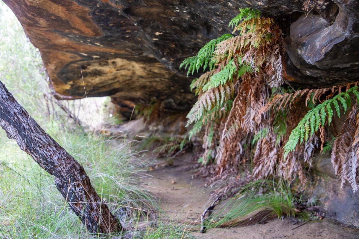 awat8803 lr Myall Trail - Art Shelter