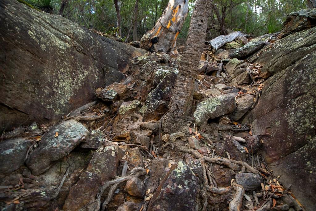 AWAT2460 LR Taffys Rock