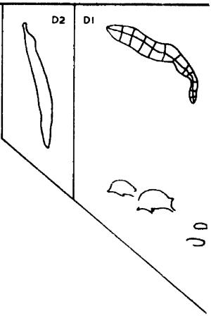 engraving sim monavalerd Echidnas & Snake (Mona Vale Road)