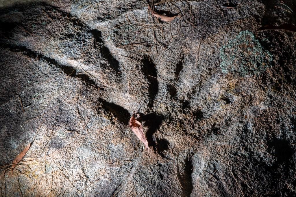 AWAT1467 LR Mt Ku-ring-gai Aboriginal site