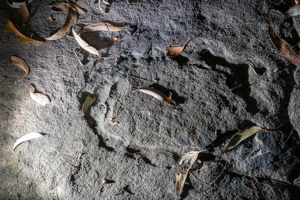 AWAT1505 LR Mt Ku-ring-gai Aboriginal site