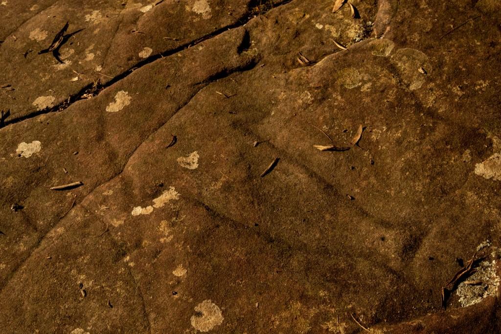 Fish at Washtub Gully (Berowra Waters) engraving site