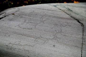 MG 7362 LR Alta Rock Art - Apana Gård 2A