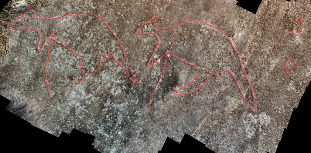 kangaroos highlighted Wheeler Heights Aboriginal Site