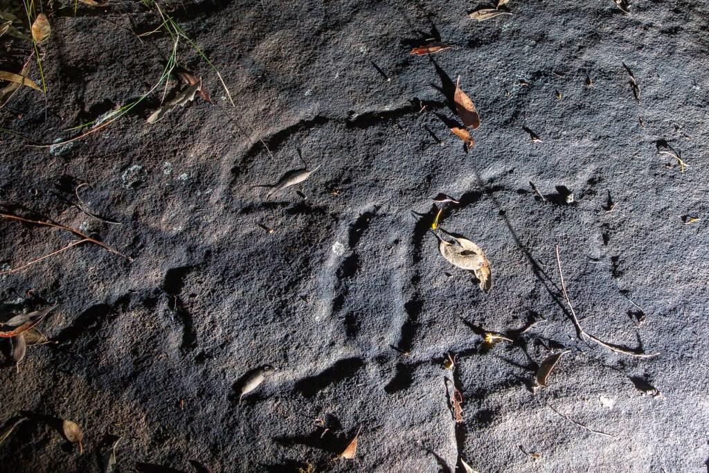 "AWAT4882 LR Terrey Hills - ""Lyrebird Site"""