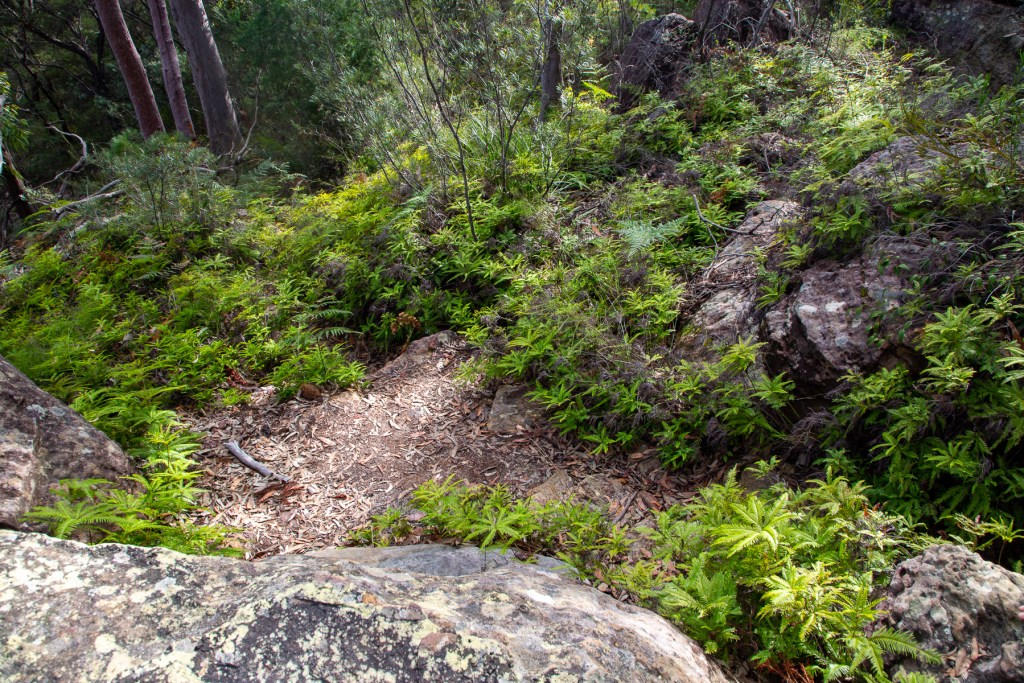 AWAT4893 LR Sams Creek Loop