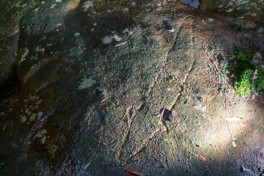 AWAT4955 LR Berkeley Trail Eel
